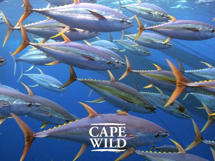 Tuna and Swordfish Breakwater Products