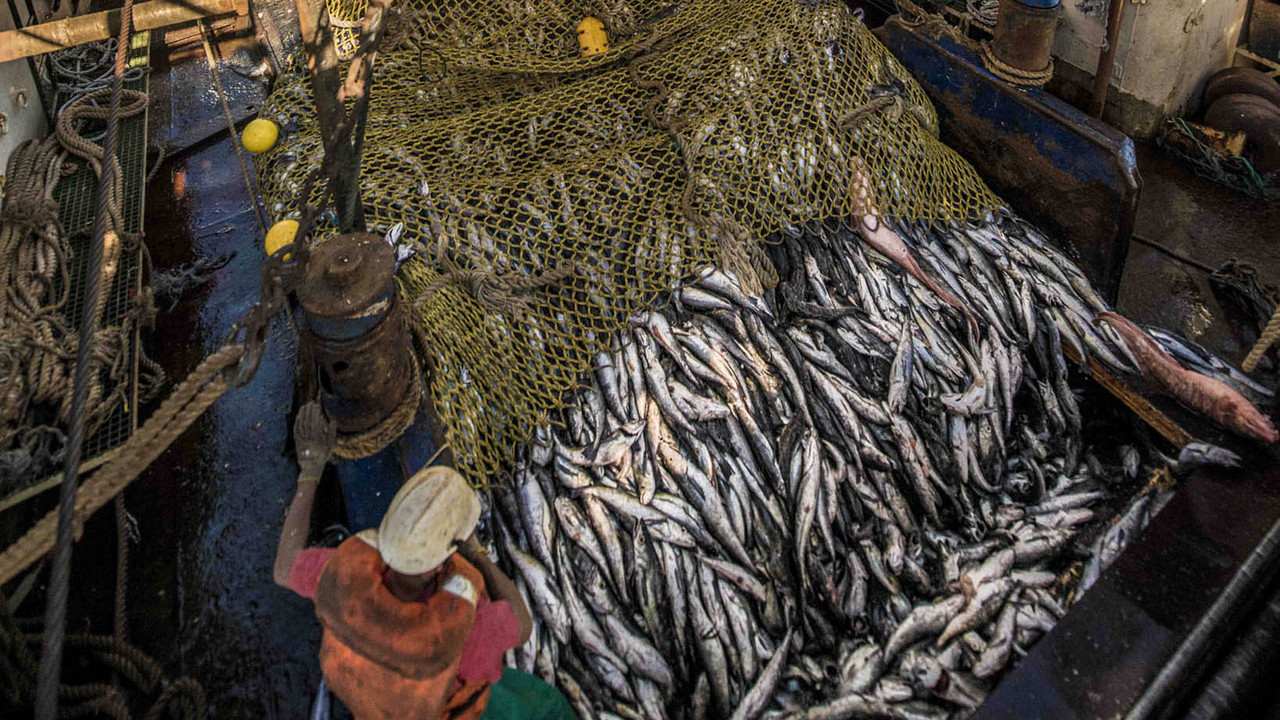 Sustainable Fishing South Africa